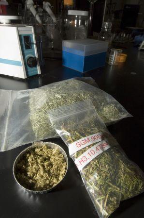 Biomass after AFEX process