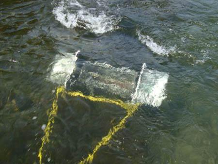 Flipwing in water