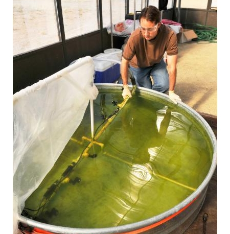 Algal biofuels researcher
