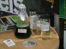 Photosynthetic Bacteria: Arizona State University