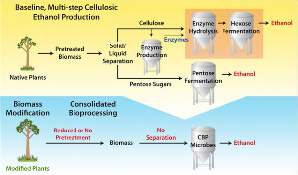 biofuel and engineering microbe for cellulase production essay