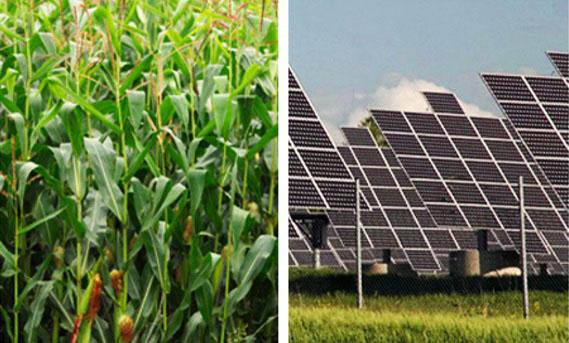 Crops vs. Solar