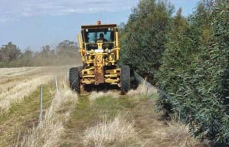 mallee-based biofuel, australia