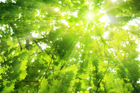 solar power, natural photosynthesis
