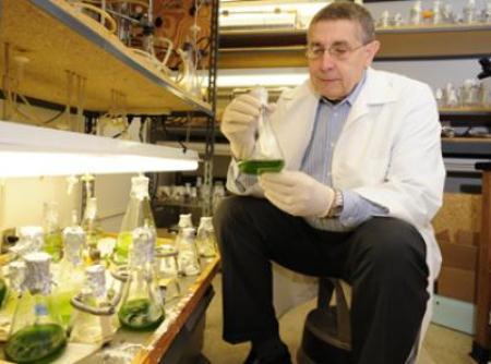 algae-biofuels-spalding