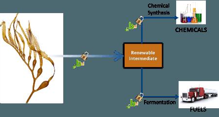seaweed-biofuel