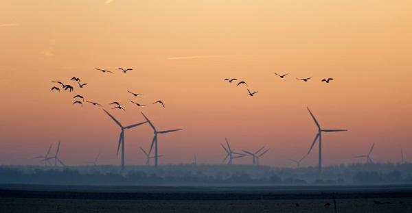 wind bird conflict u.s. wind development guidelines