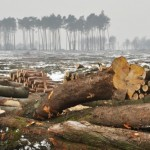 deforestation,carbon release,uc davis study