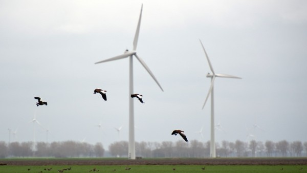 wind power and birds