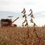 soybean field, biodiesel