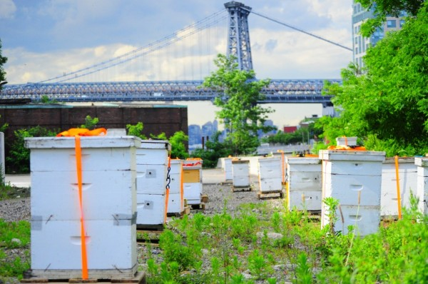 Brooklyn Grange apiary