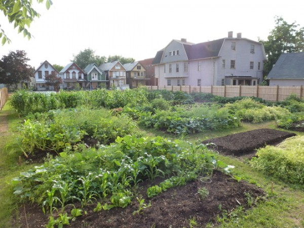 Green Development Zone community garden