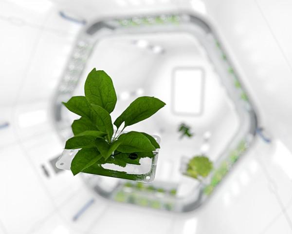 NASA-Plant-Design-1