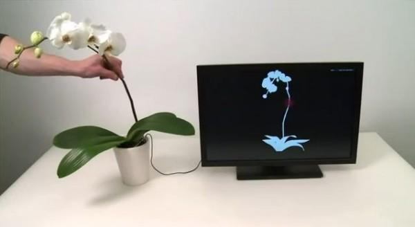 botanicus interactus controller