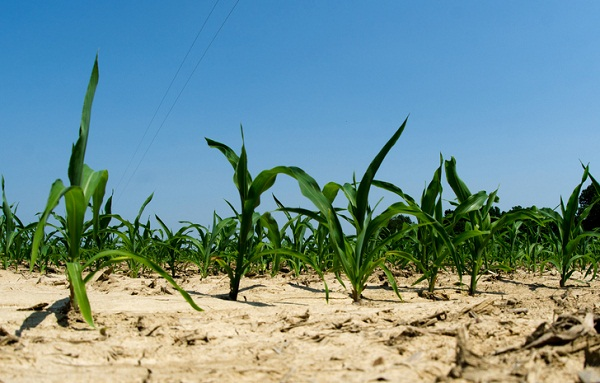 food vs. fuel corn crop renewable fuel standard