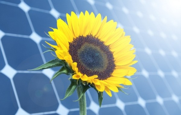 Solar Tracker Mimics Sunflower To Boost Efficiency