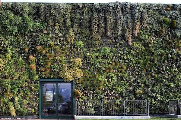 Bollani_vertical_garden_3