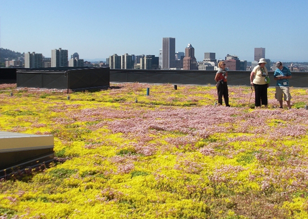 green roof, Portland