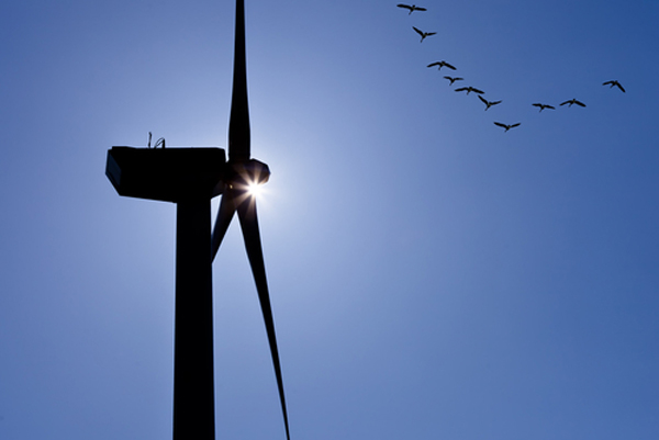 Birds wind turbine
