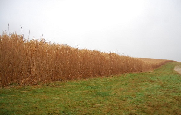 biofuel cellulosic ethanol