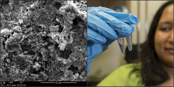 Rice University Crushed Silicon Batteries