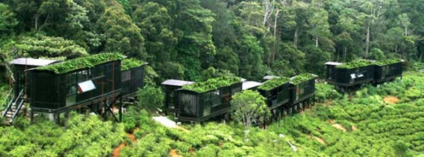 Rainforest Ecolodge 1