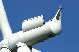 wind energy deaths