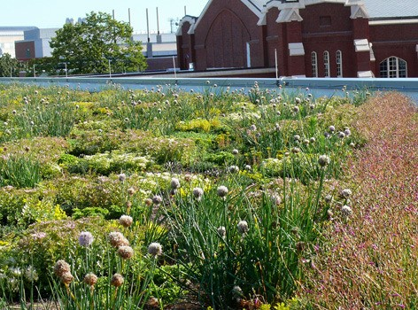 Green roof, which was recently planted atop the State Gym roof. Image by Kerry Dixon-Fox via Inside Iowa State.