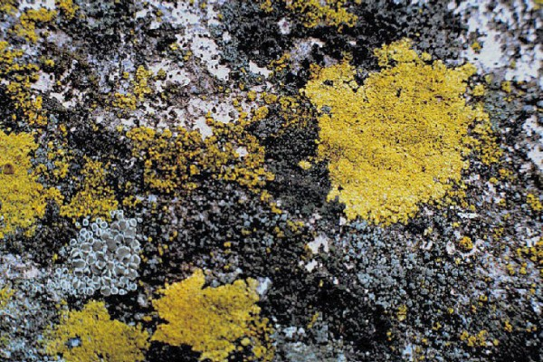 Closeup of lichens growing on natural stone. Image via Universitat Politècnica de Catalunya.