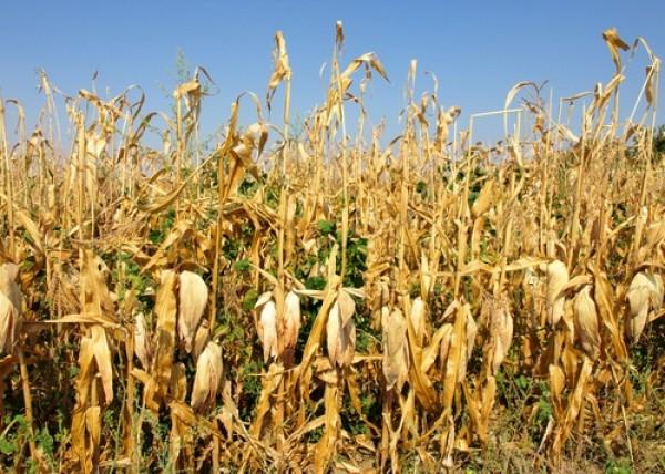 biofuels ethanol