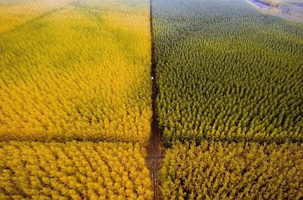 marginal lands biofuels