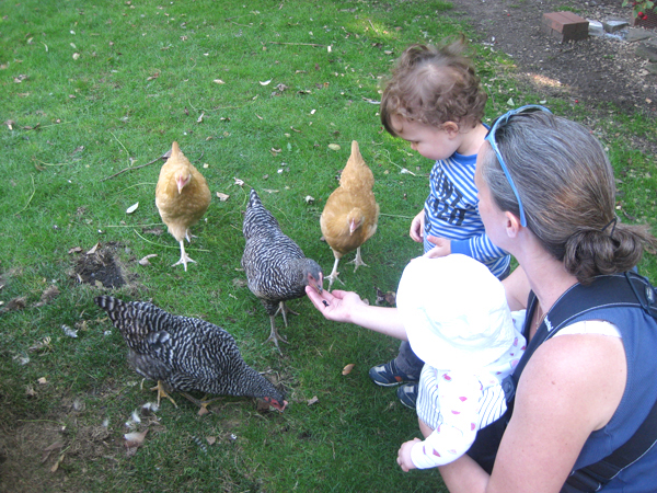 Matthew Wilson thinks it is worth the effort to teach his kids the relationship between raising chickens and their food supply. (image via Kara O'Donnell, City of Cleveland Heights/EcoWatch)