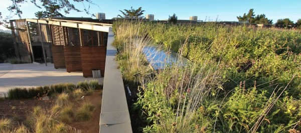 Rooftop Grassland at Nueva School
