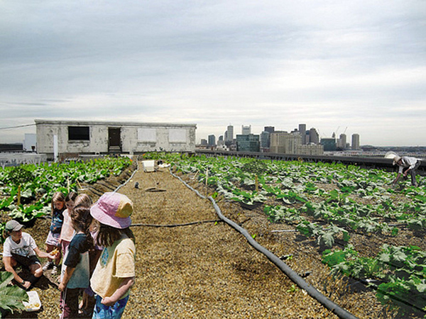 boston-urbanfarm