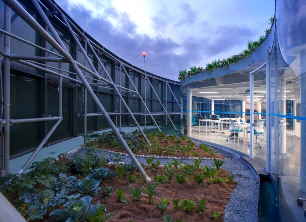One of the vegetable gardens outside the offices, irrigated by rainwater collection. Image via Rojkind Arquitectos.