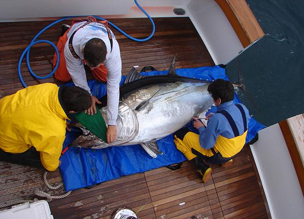 fish tagging