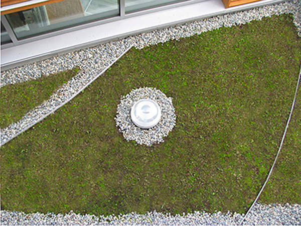 Excess rainfall is absorbed on the school's green roof. Image via Bertschi School.