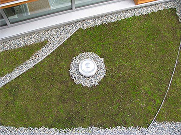 Excess rainfall is absorbed on the school's green roof. Image via Bertschi School.