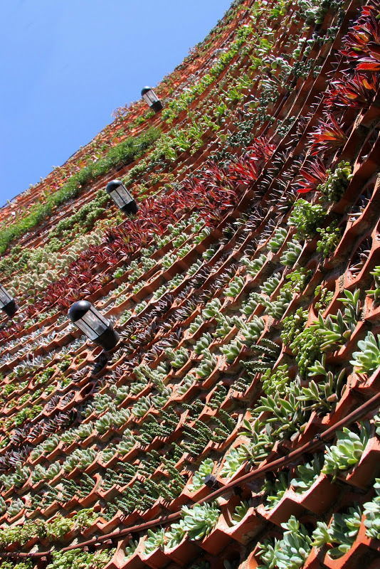 A closeup of some of the succulents growing in the Eco.bin wall. Image via Urbanarbolismo.