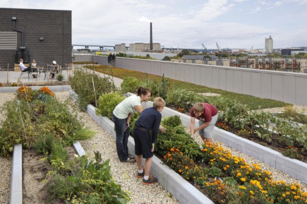A rooftop garden grows vegetables for residents and also captures rainwater for reuse. Image via Continuum Architects + Planners.