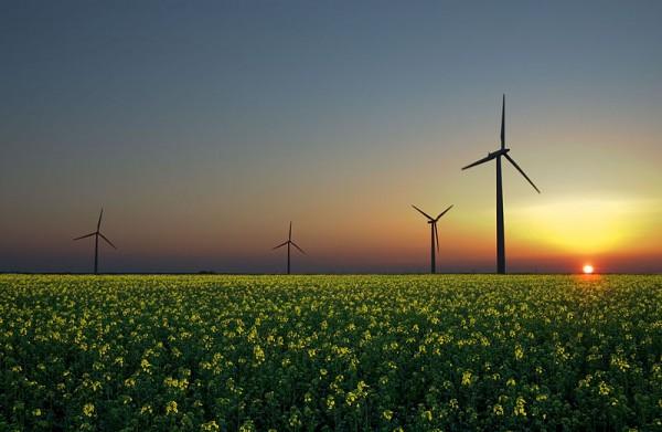 green jobs growth