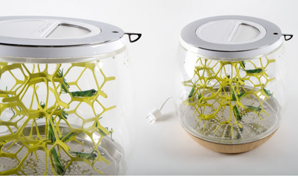 Lepsis Terrarium, grow your own, edible bugs