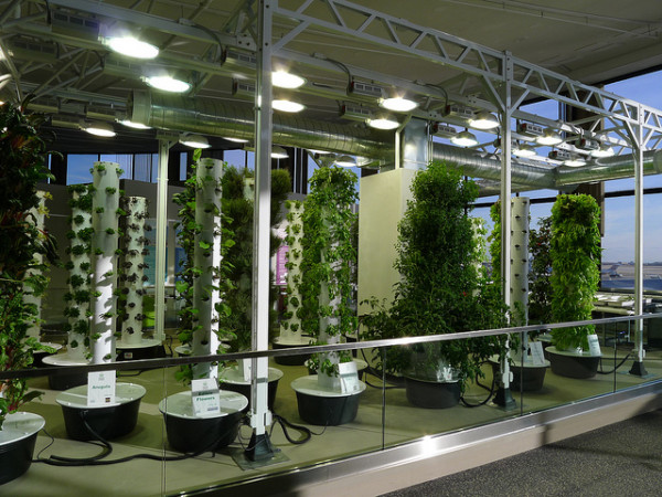 chicago ohare airport indoor vertical garden 1