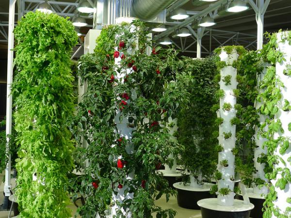 chicago ohare airport indoor vertical garden