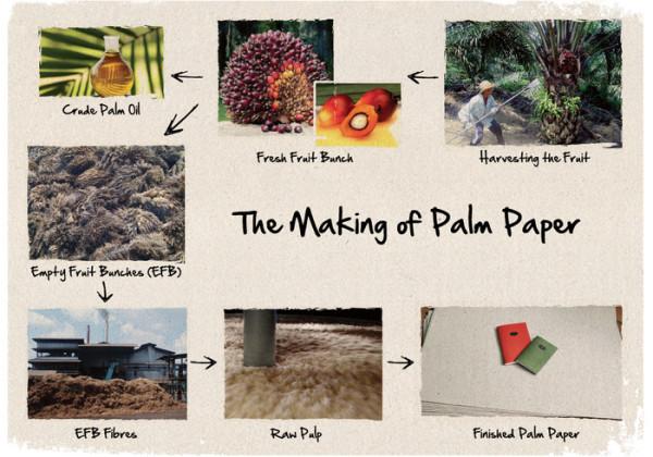 palm paper