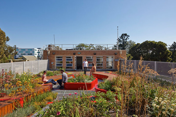 Hassell Burnley Living Roofs