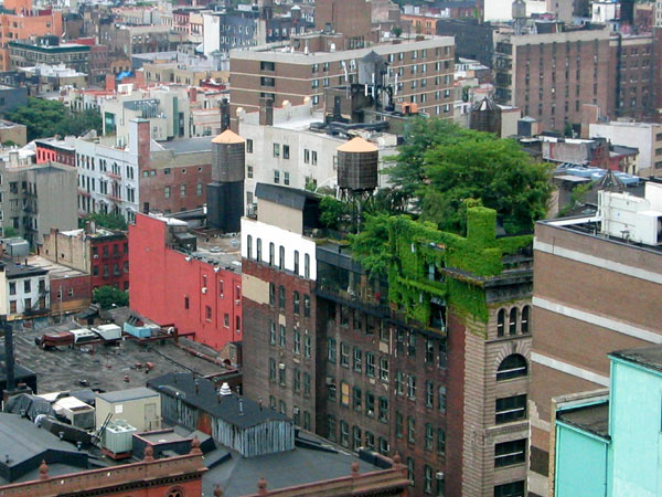 green city roof