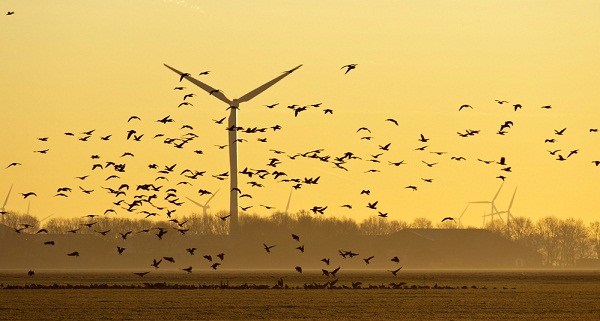 wind birds deaths