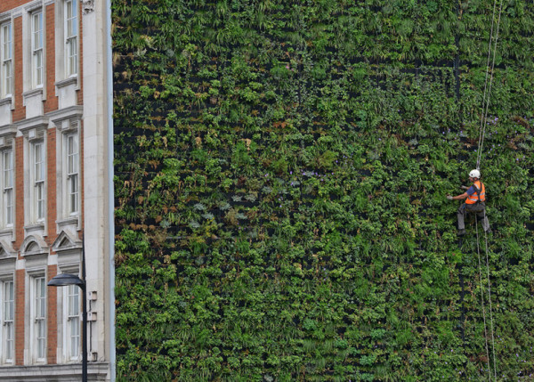 London's largest living wall