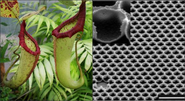 Pitcher Plant Super Glass Collage